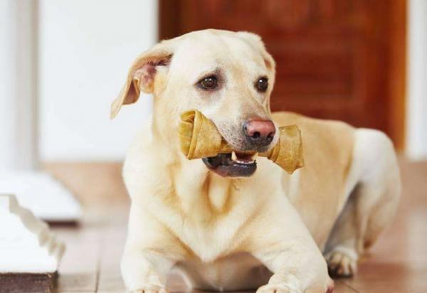 狗能吃香蕉吗